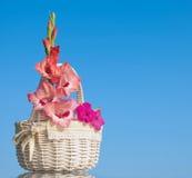 桃红色剑兰和喇叭花花 免版税库存照片