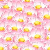 桃红色印地安莲花无缝的背景 免版税库存照片