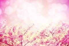 桃红色口气樱花的图象开花和bokeh 免版税库存照片