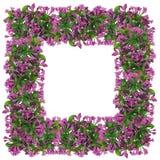 从桃红色吊钟花的复活节框架 库存图片