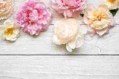 桃红色和乳脂状的牡丹开花与在白色木背景的玫瑰 平的位置 与拷贝空间的顶视图 免版税库存照片
