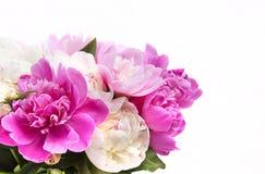 桃红色和白色牡丹美丽的花束  免版税库存图片