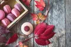 桃红色和白色通心面用莓和一朵美丽的玫瑰色花 点心特写镜头 复制空间 库存照片