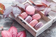 桃红色和白色通心面用莓和一朵美丽的玫瑰色花 点心特写镜头 库存照片