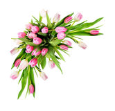 桃红色和白色郁金香开花壁角安排 库存图片