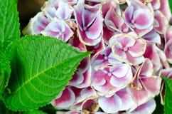 桃红色和白花从事园艺床 库存照片