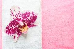 桃红色和空白兰花 免版税图库摄影