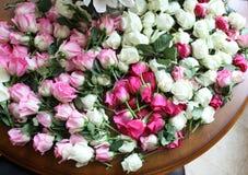 桃红色和空白玫瑰 免版税库存照片
