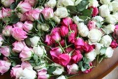 桃红色和空白玫瑰 库存照片