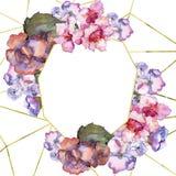 桃红色和紫色gardania 花卉植物的花 框架边界装饰品正方形 库存照片