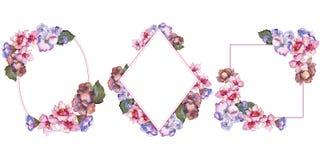 桃红色和紫色gardania 花卉植物的花 框架边界装饰品正方形 图库摄影