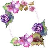 桃红色和紫色gardania 花卉植物的花 框架边界装饰品正方形 免版税图库摄影