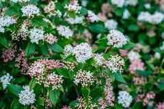 桃红色和绿色花在庭院里 免版税库存照片