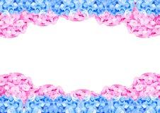 桃红色和蓝色八仙花属框架 库存图片