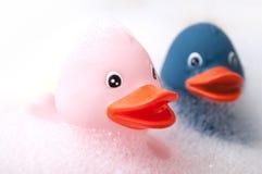 桃红色和蓝色橡胶鸭子戏弄与在浴的青苔 库存照片