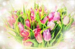 桃红色和紫罗兰色郁金香 免版税库存图片