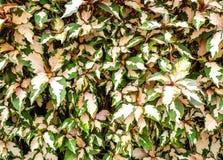 桃红色和绿色叶子背景 库存图片