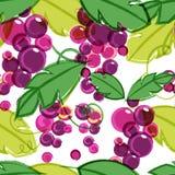 桃红色和紫色成熟葡萄树与绿色叶子 抽象vect 免版税库存照片