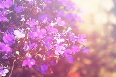 桃红色和紫色花开花,选择聚焦 库存图片