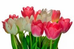桃红色和黄色郁金香新鲜的春天假日花束  库存照片