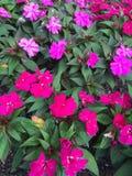 桃红色和紫色野花 免版税库存图片