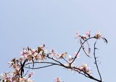 桃红色喇叭花花束与后面光的 免版税图库摄影
