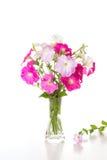 桃红色喇叭花花束  库存图片