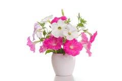 桃红色喇叭花花束  库存照片