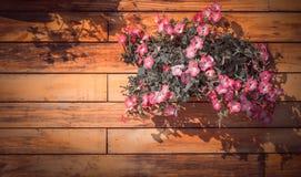 桃红色喇叭花花 库存照片