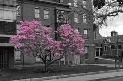 桃红色在城市 库存图片