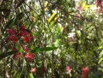 桃红色在庭院里 免版税库存照片