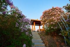 桃红色在盛开和亭子日出开花 免版税库存照片