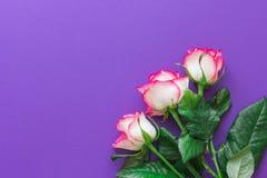 桃红色在紫罗兰色背景顶视图的玫瑰花 水平地 库存照片
