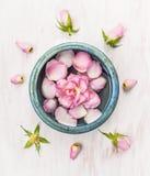 桃红色在蓝色碗的玫瑰花在与芽的白色木背景 库存图片
