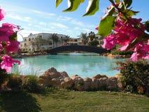桃红色在蓝色水池附近开花 免版税图库摄影