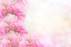 桃红色在软的bokeh葡萄酒背景的玫瑰花华伦泰的 库存照片