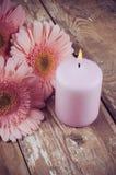 桃红色大丁草和一个蜡烛 免版税库存图片