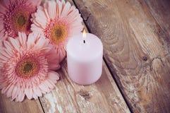 桃红色大丁草和一个蜡烛 免版税库存照片