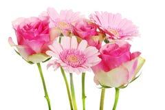 桃红色大丁草花和玫瑰花束。 免版税库存图片
