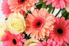 桃红色大丁草花和白玫瑰花束 库存图片