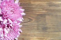 桃红色大丽花背景土气木头 库存图片