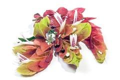 桃红色大虾厂的五颜六色的花 免版税图库摄影