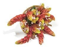 桃红色大虾厂的花柳条筐的 图库摄影