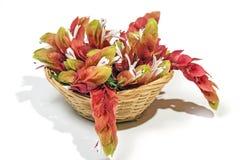 桃红色大虾花显示在被编织的柳条筐的 库存图片