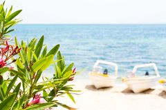 桃红色夹竹桃叶子、蓝色海和小船夏天背景 库存图片