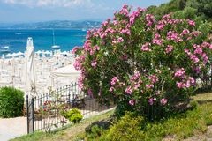 桃红色夹竹桃花、海滩与伞和蓝色海 免版税库存图片