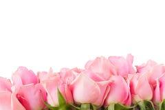 桃红色庭院玫瑰边界  免版税图库摄影