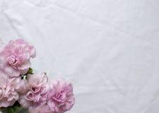 桃红色康乃馨和白色桌布 免版税库存图片