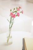 桃红色康乃馨在绝尘室 免版税库存照片