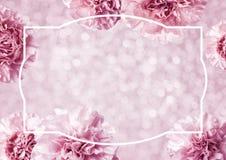 桃红色康乃馨的母亲节概念开花背景 图库摄影